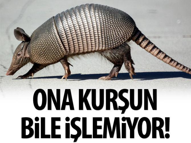 ZIRHLI HAYVAN ARMADİLLO