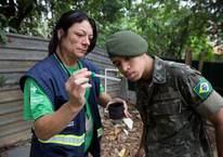 Brezilya ordusu Zika virüsüyle savaşacak