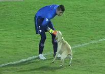 Kupa maçında sahaya köpek girdi!