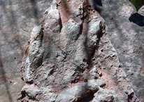 230 milyon yıllık müthiş keşif