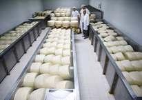 Avrupa'nın ünlü peynirlerini Türkiye'de üretiyorlar