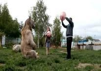 Evcil hayvanları bir ayı