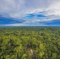 Amazon'da tesadüf eseri yeni bir kabile keşfedildi