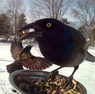 Bahçesindeki kamera sayesinde hiç görmediği kuşlarla karşılaştı