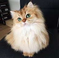 Dünyanın en fotojenik kedisi