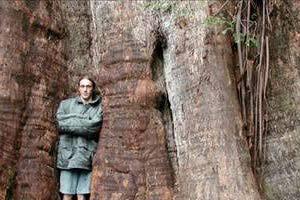 Dünyanın en uzun 10 ağacı