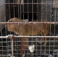Musul'da hayvanlar da DEAŞ kurbanı