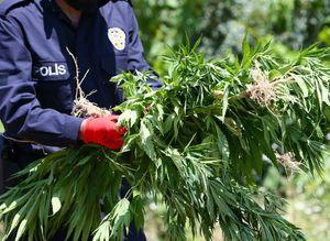 PKK'nın yıllık uyuşturucu geliri dudak uçuklattı