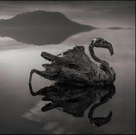 Bu göle giren taş kesiliyor