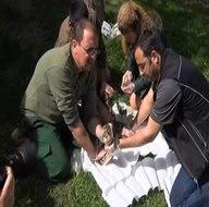 Bursa'da dev yılana nefes kesen operasyon