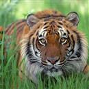 En uzun yaşayan hayvan hangisidir?