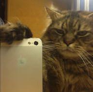 Kedilerin selfiesi güldürdü