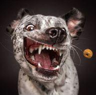 Köpeklerin komik tepkileri