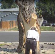 Kurumuş ağaçtan sanat eseri ortaya çıkardı