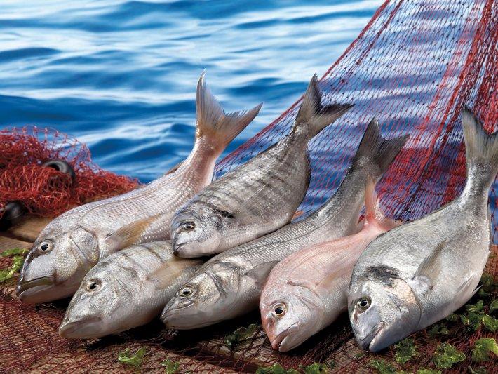 taze balık ile ilgili görsel sonucu