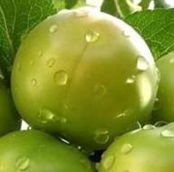 Yeşil eriğin hiç bilinmeyen 7 faydası...