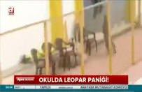 Leopar okula girdi, görevlilere saldırdı