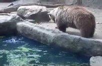 Kargayı göletten ayı kurtardı