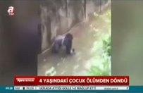 Gorillerin kafesine düştü!