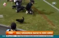 Maç esnasında sahaya kedi girdi