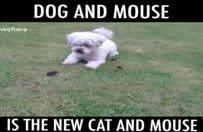 Köpek olalı bir fare tutamadı