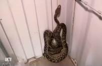 Sunucu yılanla şov yapmak isteyince...