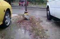 Yağmurdan kaçan kedi bakın nereye sığındı