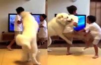 Kavga eden kardeşleri ayırmaya çalışan köpek