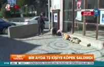 İzmir'de kuduz paniği!