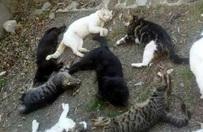 Alanya'da 30 kedi katledildi