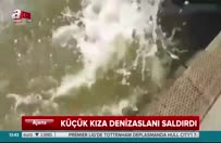 Küçük kıza denizaslanı saldırdı