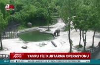 Filler birlik oldu yavruyu kurtardı